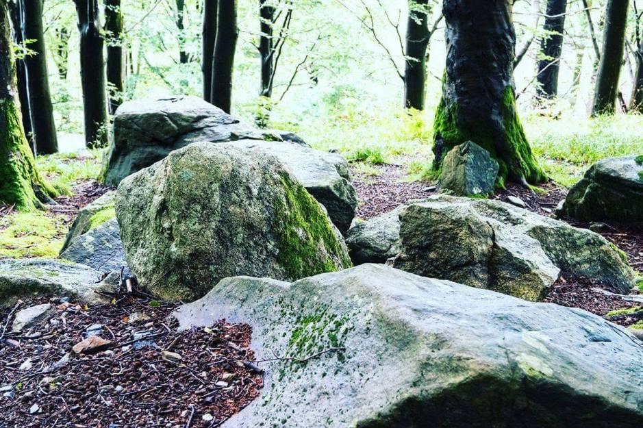 BILDE 5 - steiner